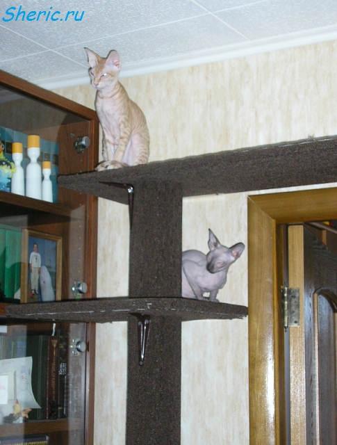 Лазалка для кошек